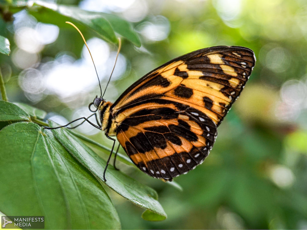 A beautiful yellow and orange butterfly  at Butterfly Pavilion in Westminster, Colorado.